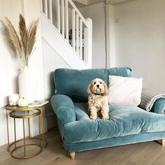 Pooches are pros in the art of loafing and this pup is no exception. Thanks for this shot of your Slowcoach love seat, Living Room Sofa, Home Living Room, Living Room Designs, Living Room Decor, Blue Velvet Sofa Living Room, Living Room Seating, Room Interior, Home Interior Design, Home Design