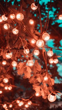 Wallpapers light emitting diode, lighting, christmas lights, branch, incandescen… – iPhone Wallpapers Vintage is not as old …