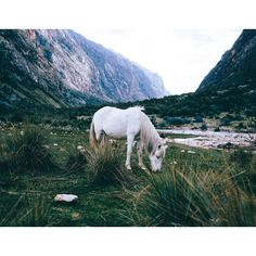 """18.5 mil curtidas, 139 comentários - FORREST WINANTS SMITH (@lostintheforrest) no Instagram: """"From an encounter with wild horses on day 12 in Peru. More pictures and words from my journey on my…"""""""