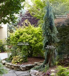 7 ways to use conifers in the garden: Conifers provide the garden with incredible form, color and texture in every season. Learn one expert's secrets to designing with these evergreens. Back Gardens, Small Gardens, Outdoor Gardens, Evergreen Landscape, Evergreen Garden, Back Garden Design, Garden Design Plans, Landscaping With Rocks, Front Yard Landscaping