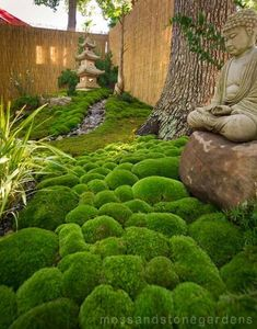 A very small but beautiful moss garden. Moss & Stone Gardens #japanese garden #japanesegarden