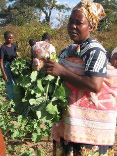 Farmers.  Zambia