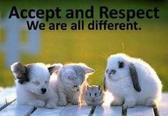 word of wisdom, animals, colleges, little ones, inspir, kittens, beauty, quot, messages