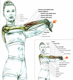 Stretching the Forearm Muscles