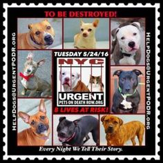 8 DOGS & puppies ON DEATH ROW DUE 2B DESTROYED B4 NOON ON TU... - Care2 News Network