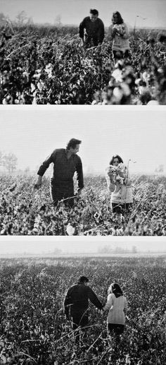 Johnny and June Cash in the cotton fields near John's childhood home in Dyess, c. Johnny Cash June Carter, Johnny And June, Johnny Cash House, Great Love Stories, Love Story, Country Singers, Country Music, Beatles, Wildwood Flower