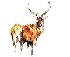 Deer by Mr Booth