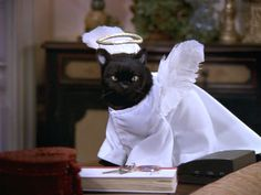 Cute Cats, Funny Cats, Funny Animals, Salem Sabrina, The Witches 1990, Salem Cat, Salem Saberhagen, Son Chat, Cat Icon