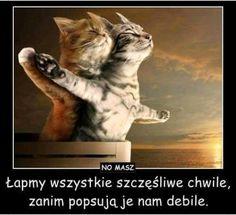 Titanic, The Feline Version ♥ Funny Meme Pictures, Funny Cat Memes, Funny Animal Pictures, Funny Dogs, Funny Humor, Funny Animal Fails, Funny Animals, Funniest Animals, Adorable Animals
