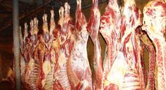 Macedonian lamb price low, mainly exported to Italy - Makedonien. mk - Macedonian lamb price low, mainly exported to Italy Macedonian lamb price low, mainly exported to Italy - Macedonian Food, Italian Market, Goat Meat, Feta, Salad Recipes, Sheep, Lamb, Goats, Italy