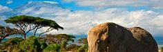 Safari trips in Kenya