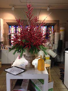 ILEX berries fir Christmas
