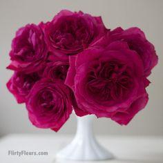 Flirty Fleurs Pink Garden Roses Study with Alexandra Farms - David Austin Capability Hot Pink Magenta Garden Rose David Austin Roses, Romantic Roses, Beautiful Roses, Floral Wedding, Wedding Colors, Wedding Ideas, Pink Garden, Garden Roses, Color Magenta
