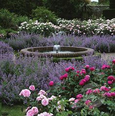 english roses, english rose garden, beauti lavend, lavender and roses, fountain
