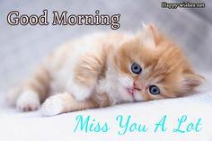 Best Cute Kitten Wallpaper No 5 of 10 Cute Kittens, Kittens And Puppies, Ginger Kitten, Ginger Cats, Chat Scottish Fold, Good Morning Cat, Gato Anime, Kitten Wallpaper, Cat Background
