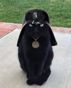 I find your lack of treats disturbing - LOLcats is the best place to find and submit funny cat memes and other silly cat materials to share with the world. We find the funny cats that make you… Cute Funny Animals, Funny Animal Pictures, Funny Cats, Animal Pics, I Love Cats, Crazy Cats, Cool Cats, Beautiful Cats, Animals Beautiful
