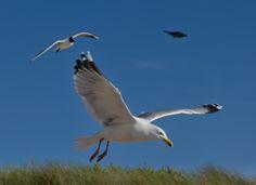 Birds In Flight, Explore, Animals, Animales, Flying Birds, Animaux, Exploring, Animal, Animais
