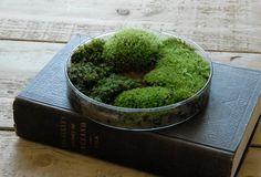 Moss Petri Dish Terrarium -