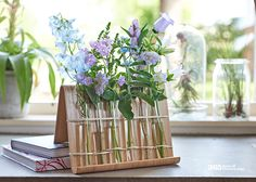 Remarkable #blue mavericks #summer #zomer #flowers