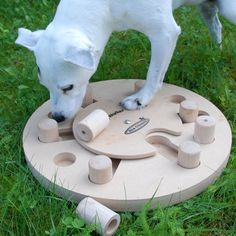 Interactive Dog Toys--amazing tools for draining energy, building bonds, & appealing to breed instincts!
