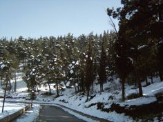 Forest and snow near Farsala town, Larissa Prefecture, Thessaly, Greece Greek Flowers, Forest Mountain, Tree Forest, Flowering Trees, Greece, Paradise, Snow, Mountains, Landscape