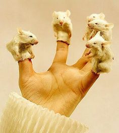 Real mice finger puppets! Delightful!