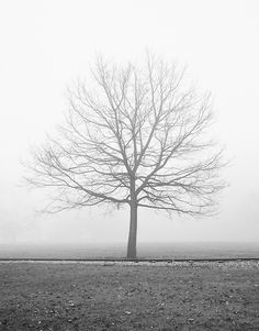 Vanilla Dream, Autumn Fog, Black and White Landscape Photography - Black and white landscape photograph of a bare tree in a foggy park.