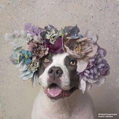 """French Photographer Stands Up For Animal Rights Through """"Pit Bull Flower Power"""" Project  Sophie Gamand is a French photographer and animal rights advocate based in New York city. Since 2010, her award-winning work has focused on bringing humans and dogs closer together in peaceful coexistence by portraying the animals through innocent imagery.  Her latest project titled """"Pit Bull Flower Power"""" is an initiative for an animal adoption project helping change people's perception of pit bulls"""