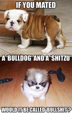 Hahahahahahaha from dumb and dumber