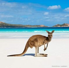 Lucky Bay, Cape Le Grand National Park, Australia. Photo by Andrew Watson.