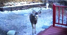 Every morning, one man likes to start his day off by having breakfast with his deer friends. (Just how many will take you by surprise!)