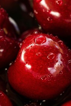 Free stock photo of red, fruits, water drops, cherries