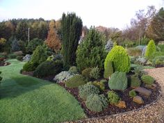 Conifer variety, Foxhollow Garden