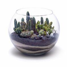 Space Of Your Own: Creating Miniature Gardens Cactus Fishbowl Garden - there are 23 or 24 ideas here.good ideas for gift giving.Cactus Fishbowl Garden - there are 23 or 24 ideas here.good ideas for gift giving. Ideas Florero, Glass Fish Bowl, Diy Fleur, Cactus Terrarium, Pot Plante, Paludarium, Vivarium, Terraria, Cactus Y Suculentas