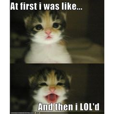 Lolcats 'n' Funny Pictures of Cats - I Can Has Cheezburger? - Page 2 found on Polyvore