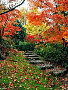 Autumn is a Second Spring.  When every Leaf is a Flower!