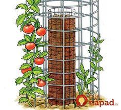 Ako získať 40 kilogramov rajčín len z 5 priesad: Geniálny zlepšovák do malých záhrad - a bez denného zavlažovania!