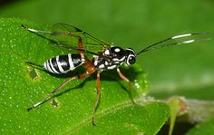 Flickriver: Edithvale-Australia Insects and Spiders's photos ...