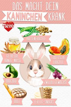 Kaninchen Futter: Das macht dein Kaninchen krank Paws away from this rabbit food if you care about y Halloween Brownies, Rabbit Food, Pet Rabbit, Easy Rabbit Recipe, Sick Food, Cocktail Party Food, Tumblr Food, Harry Potter Food, Christmas Trends
