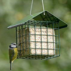 Sunflower hearts are our most popular bird food and now they can also be enjoyed in our suet cakes....