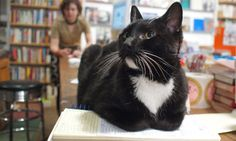 Are cats top dogs in the world of literature?    There are plenty of canine companions in the world of books, but cats can still compete for the crown of top literary pet