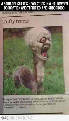 Yeah, I never trusted squirrels anyway...now zombie squirrels, great....