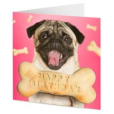 Pug dog with dog bone #message #happy #birthday card,  View more on the LINK: http://www.zeppy.io/product/gb/2/201298176144/
