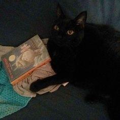 Sora leyendo el libro de Totoro. :) #gatonegro #gato #sora #gatanegra #blackcat #cat #catsofinstagram #lovelycat #gatosdeinstagram #gatosdelmundo #pelusa #pelusanegra #amordegato #catslove #catslover #catstagram #catexperience #gatovago #catoftheday #crazycatlady #caturdays365