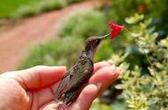 Jann Denlinger Photogrpahy | Photographer Lancaster PA | Hummingbird
