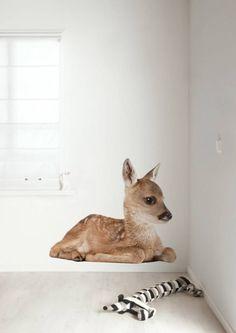 Met deze leuke muursticker van KEK Amsterdam lijkt het net alsof er een echt hert in je kamer zit! Je kunt de sticker ook combineren met andere muurstickers van