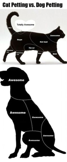 Would you agree? Head to www.4me.com.sg for more animal related videos