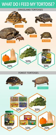 Know what to feed your tortoise depending on what type it is. Grassland Tortoises diet should consist of chopped or shredded veggies, fresh greens, and Grassland Tortoise pellets soaked in water. Forest tortoises diet should be anima Tortoise As Pets, Red Footed Tortoise, Tortoise Food, Tortoise Habitat, Tortoise Table, Turtle Habitat, Baby Tortoise, Sulcata Tortoise, Russian Tortoise Care