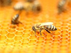 Honeybee Design Saves Energy Institute For Creation Research, Aircraft Parts, Christian College, Systems Biology, Electron Microscope, Intelligent Design, Science News, Zoology, Design Model