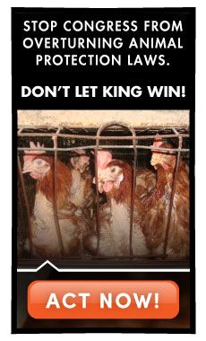 SPEAK OUT!  BE A VOICE FOR THE VOICELESS!  Farmed animals across the country urgently need your help. It is crucial that you speak out against this dangerous legislation, which would have devastating consequences if enacted. URGE YOUR REPS TO VOTE NO TO THE KING AMENDMENT IN THE FARM BILL!  PLZ Sign & Share!